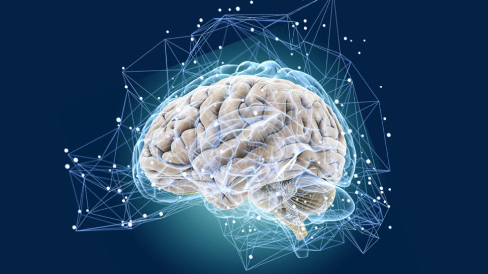Мозг сеть