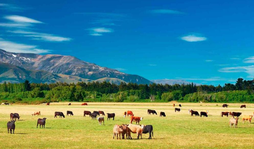 Новая Зеландия сельское хозяйство