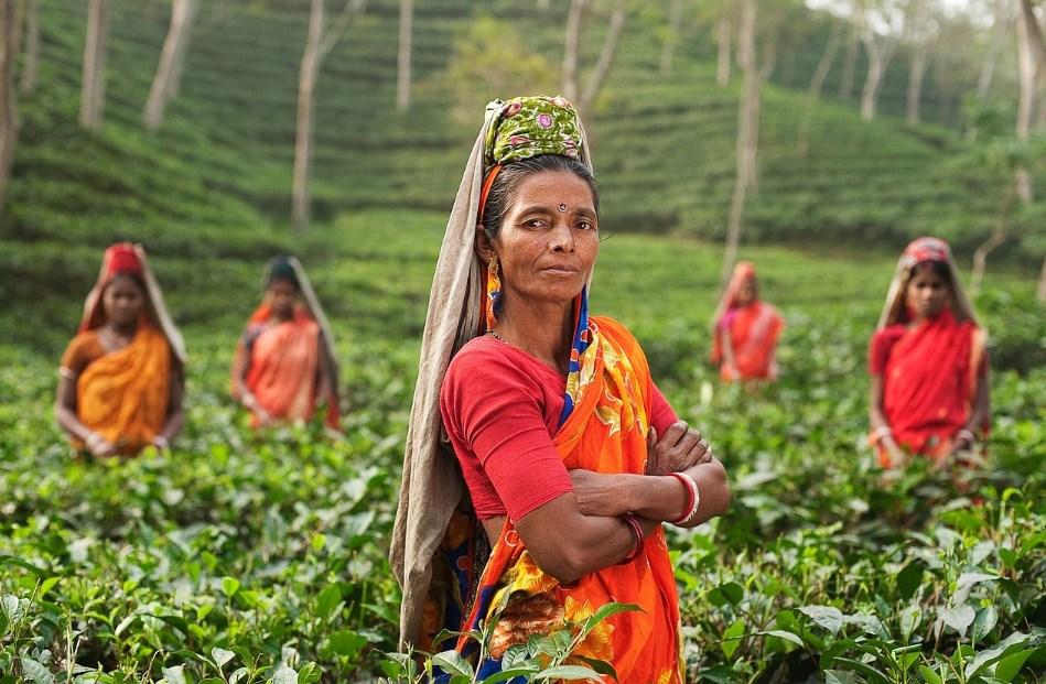 Женщины в Индии на плантациях чая