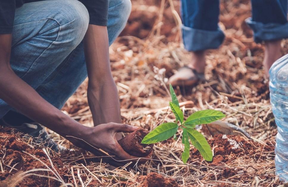 Посадка деревьев саженцами