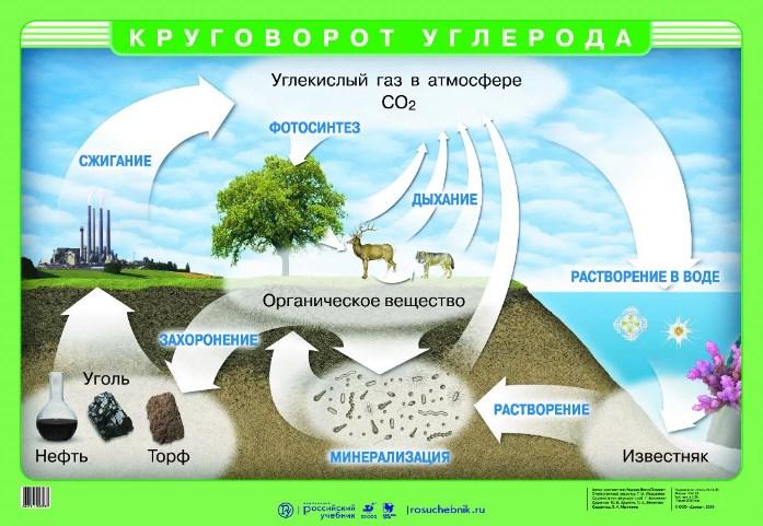 Углеродный цикл