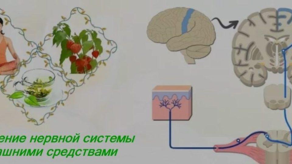 Укрепление нервной системы домашними средсвами