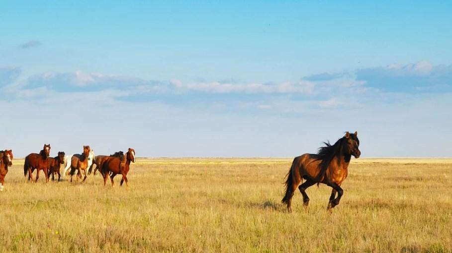 Лошади Казахстан