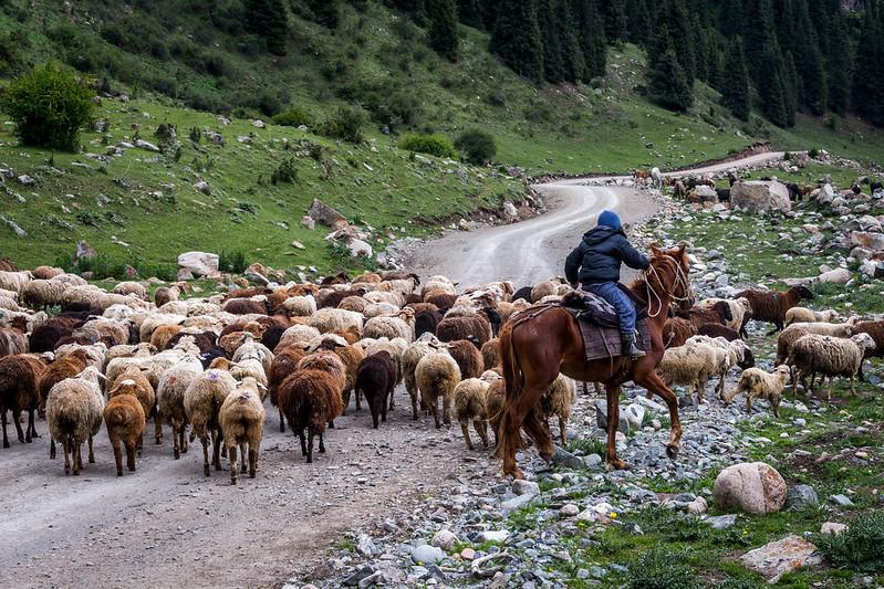 Кыргызстан, животные