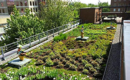 Огород на крашах зданий