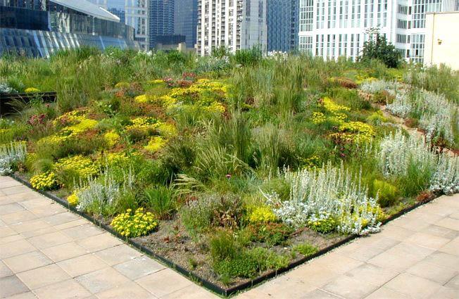 Трава на крышах зданий