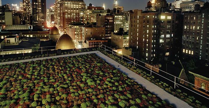 Зелень на крышах зданий