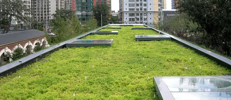 Зеленая трава на крашах зданий