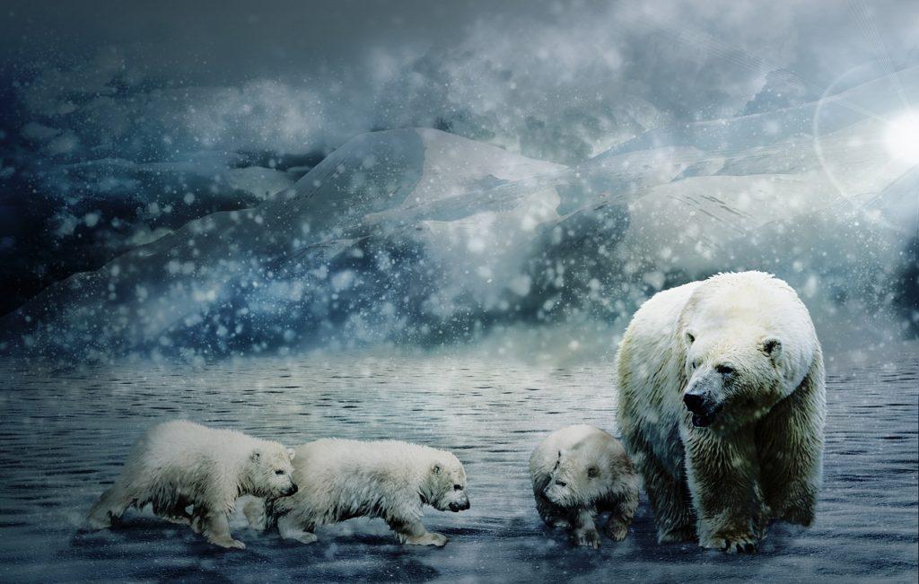 Белый медведь и медвежата