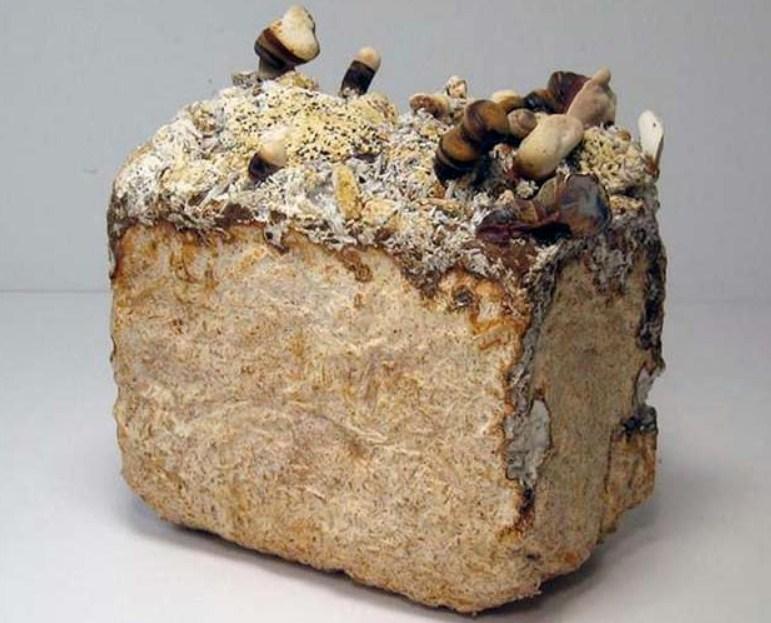 Кирпич из грибов