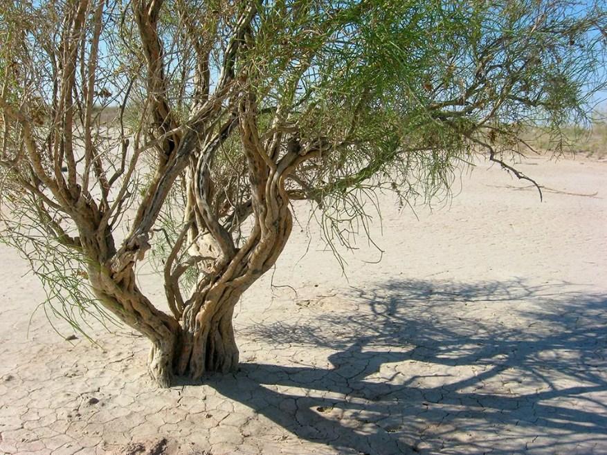 Опустынивание Туркменистан
