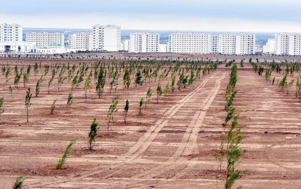 Посадки в Туркменистане
