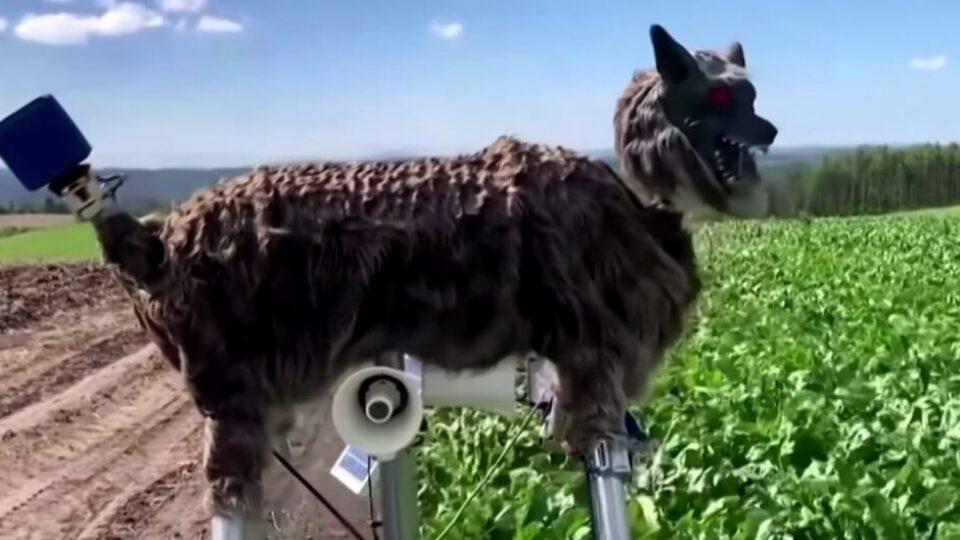Робот волк для защиты